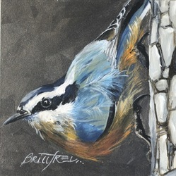 study: Red-Breasted Nuthatch